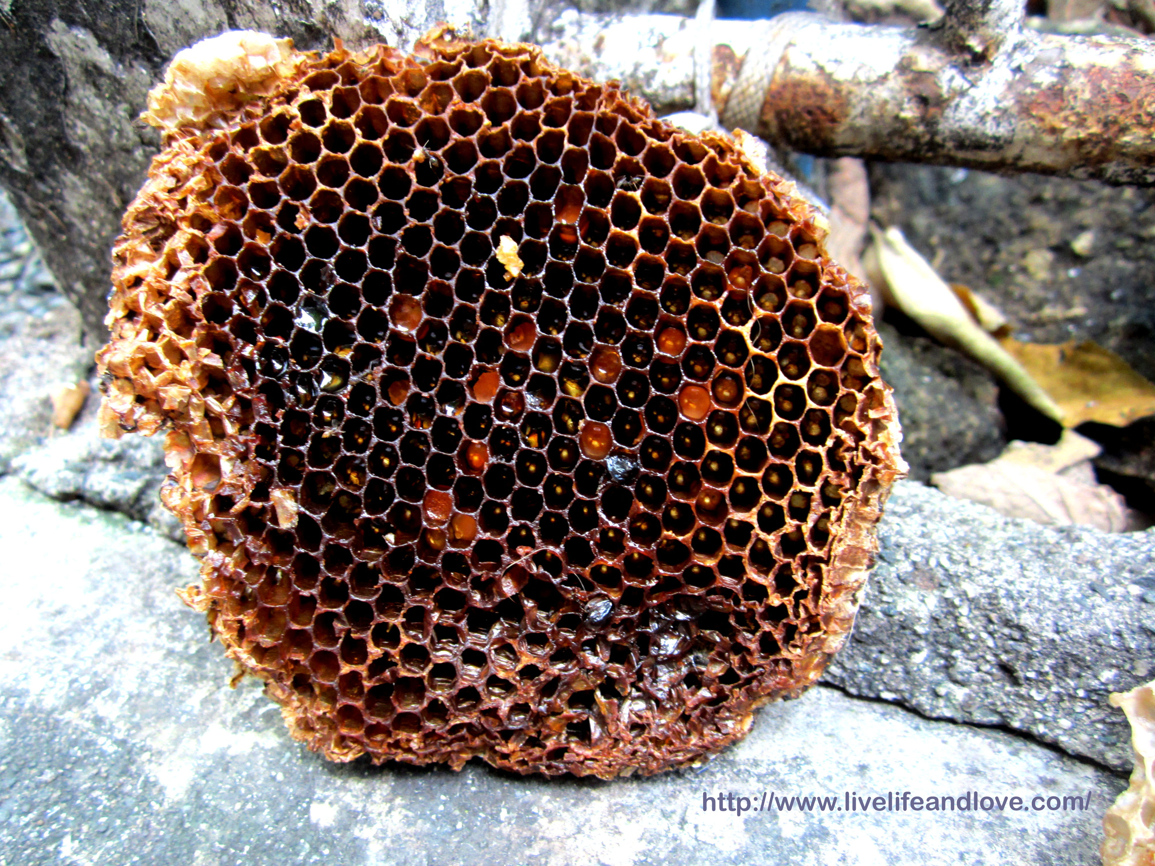 real beehive honeycomb