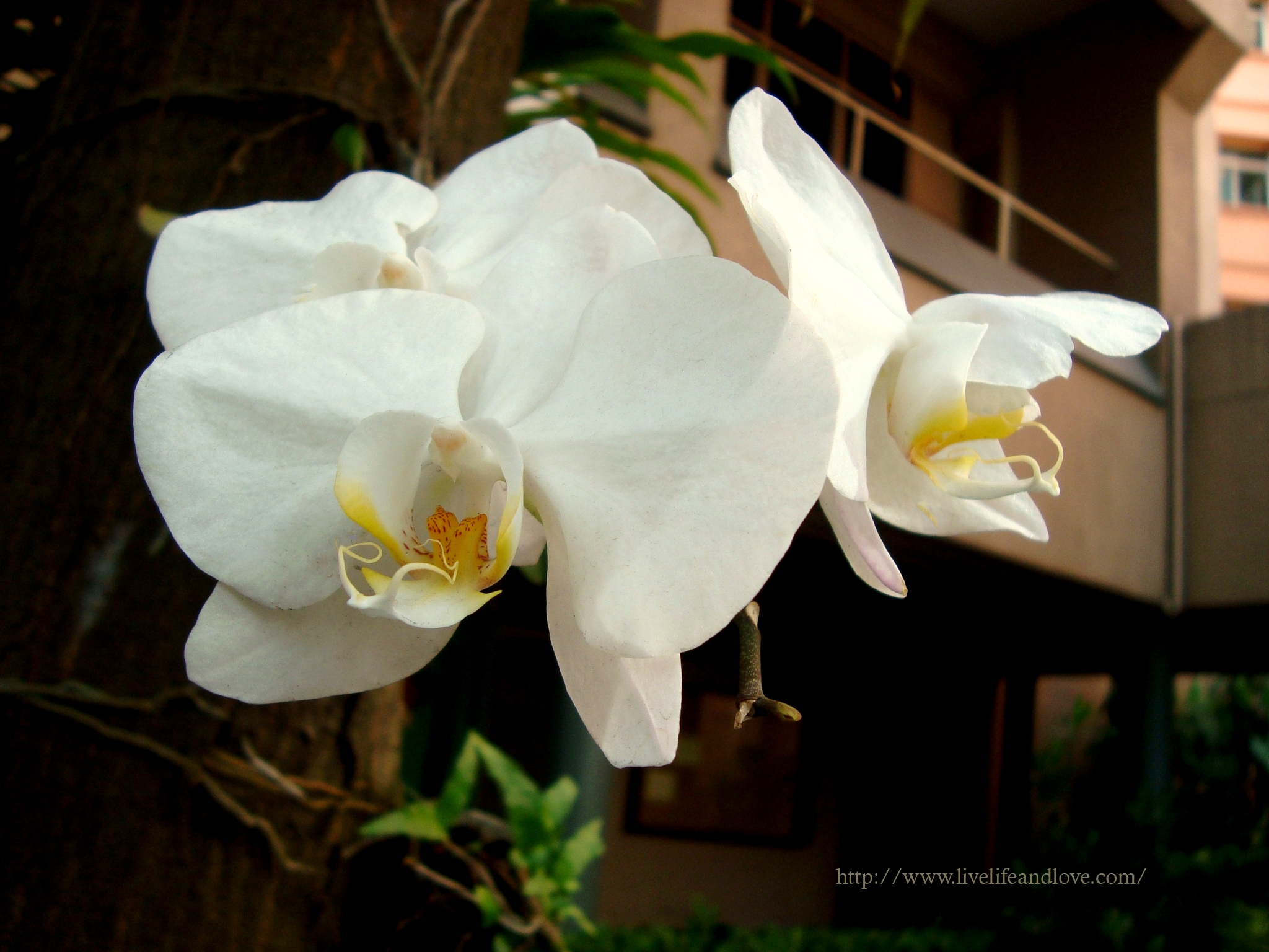 Popular Orchids Live Life And Love